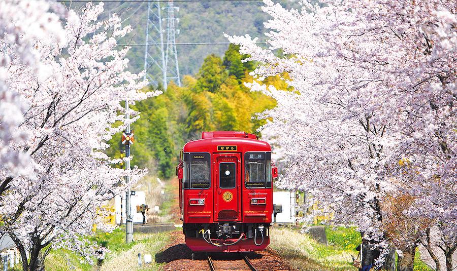 サクラのトンネルを走る、「長良川鉄道」の観光列車『ながら』